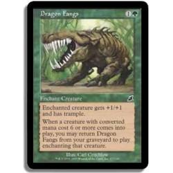 Verte - Crocs du dragon (C)