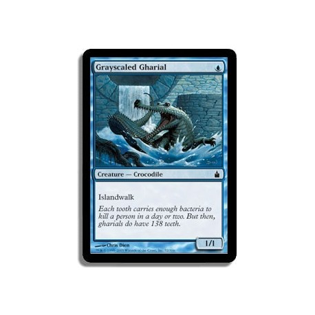 Bleue - Gavial à écailles grises (C)