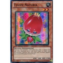 Tulipe Naturia (SR) [HA03]