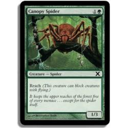 Verte - Araignée de la canopée (C)