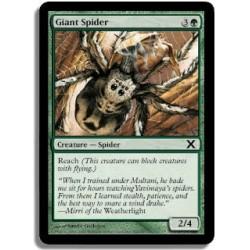 Verte - Araignée géante (C)