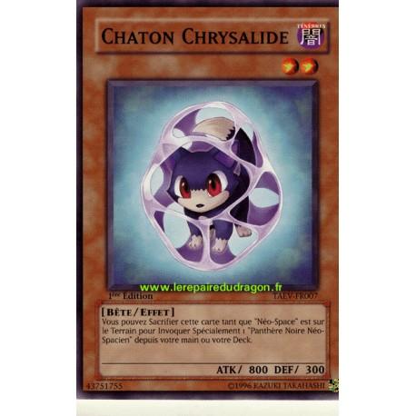 Chaton Chrysalide (C)
