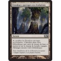 Terrain - Etendues Sauvages en Evolution (C) [M13]