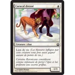 Blanche - Caracal Dressé (C) [FOIL RTR]