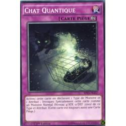 Chat Quantique  (C) [BP03]