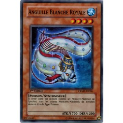 Anguille Blanche Royale (SR)